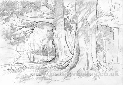 Trees on Butherlyp Howe - Original Pencil Sketch by Peter Woolley