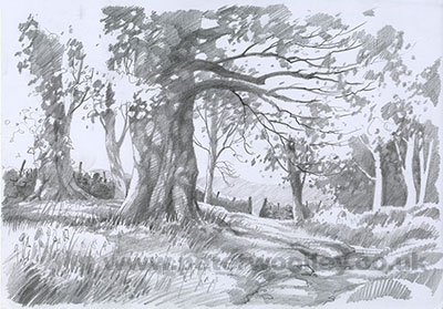 Bluebells in Strid Wood - Original Pencil Sketch by Peter Woolley